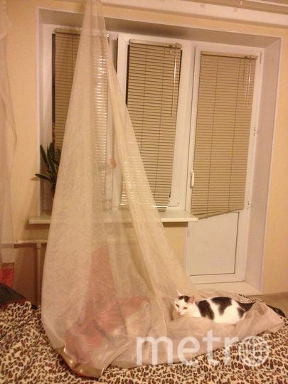 У нас два кота, которые когда-то были выброшены хозяевами. Зовут их Филя и Стёпа. Мальчики очень жизнелюбивые и добрые. Сорванные шторы - одно из многих удовольствий в их жизни. На фотографии Филя, Стёпа сбежал с места преступления. Фото Ирина Гриценко.