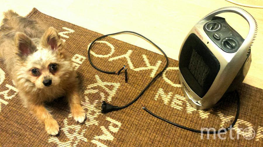 Наконец дали отопление и наш щенок МиШаня решил, что обогреватель нам больше не пригодится. Фото Юлия