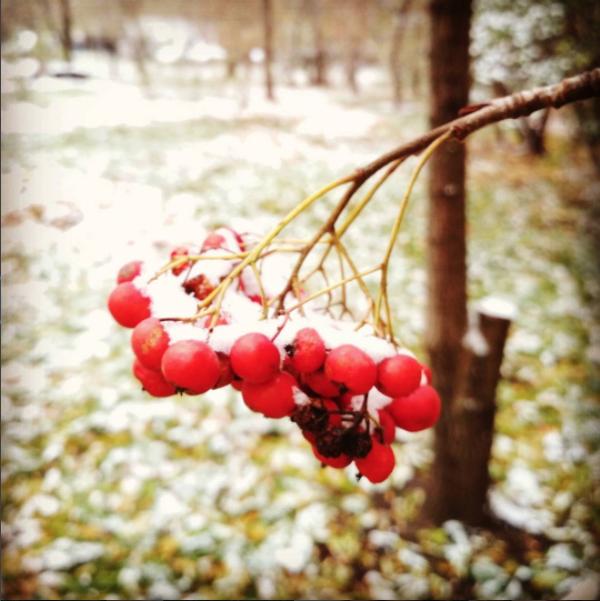 Скриншот instagram.com/antonitochka/?hl=ru.