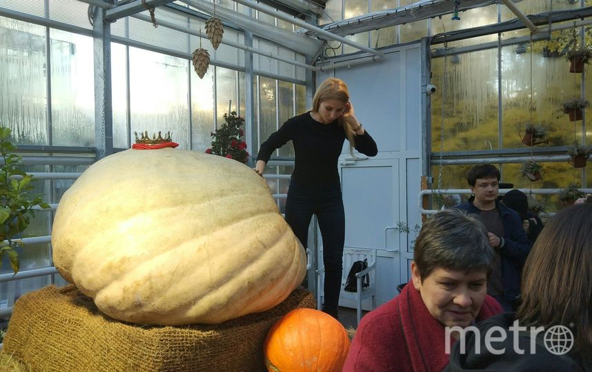 В честь Хеллоуина в «Аптекарском огороде» раздадут семена гигантской тыквы. Этот овощ, как известно, главный символ праздника. Фото Аптекарский огород., Предоставлено организаторами