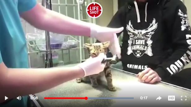 У живодерки из Кунцево отобрали кота с тяжелыми травмами. Фото Скриншот Life