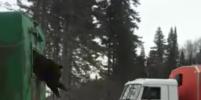 Под Нижневартовском застрявшего в окне медведя вытащили с помощью КамАЗа – видео
