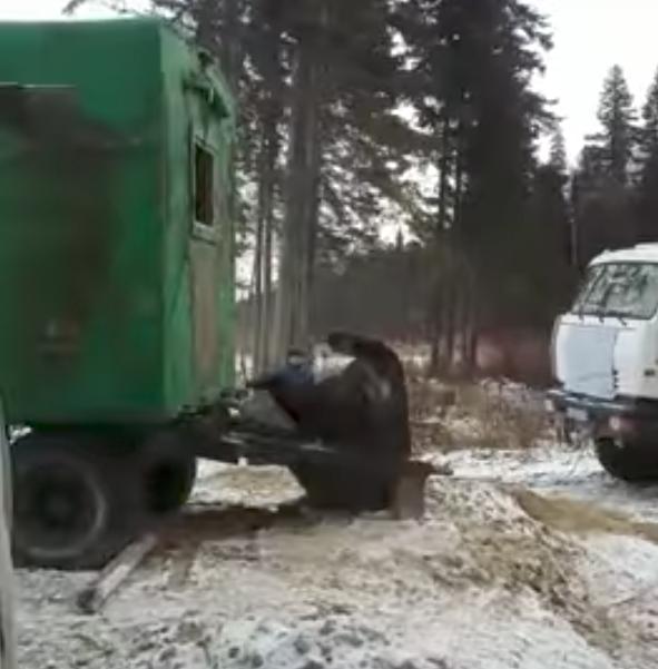 Кадры спасения медведя. Фото Эльдар Абдуллабеков., Скриншот Youtube