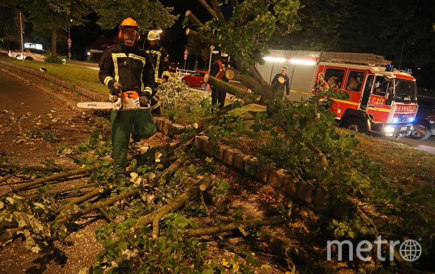 Ураган в Германии валил деревья. Фото Getty