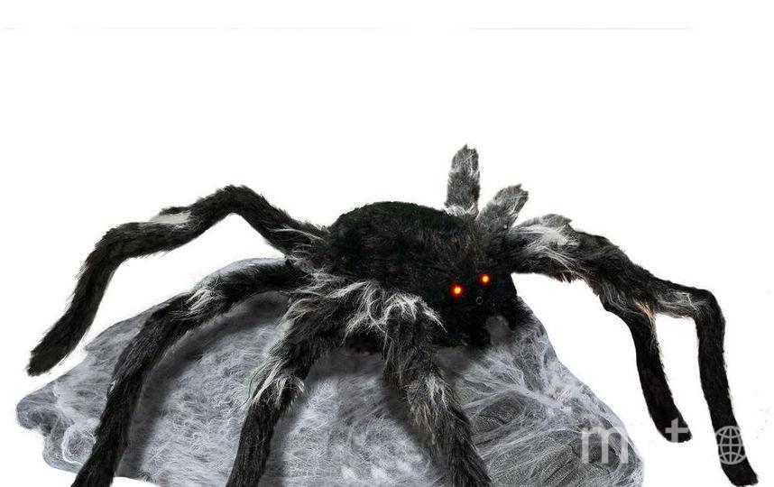 "Прыгающий паук. Фото ""Metro"""
