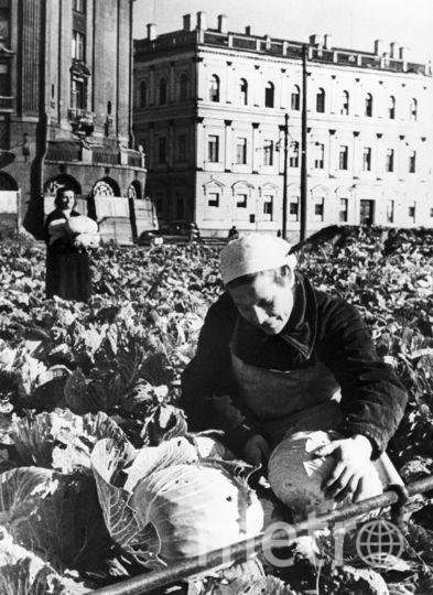 Ленинград, Выращивание овощей на площади у Исаакиевского собора во время блокады. Фото Михаила Трахмана / Фотохроника ТАСС