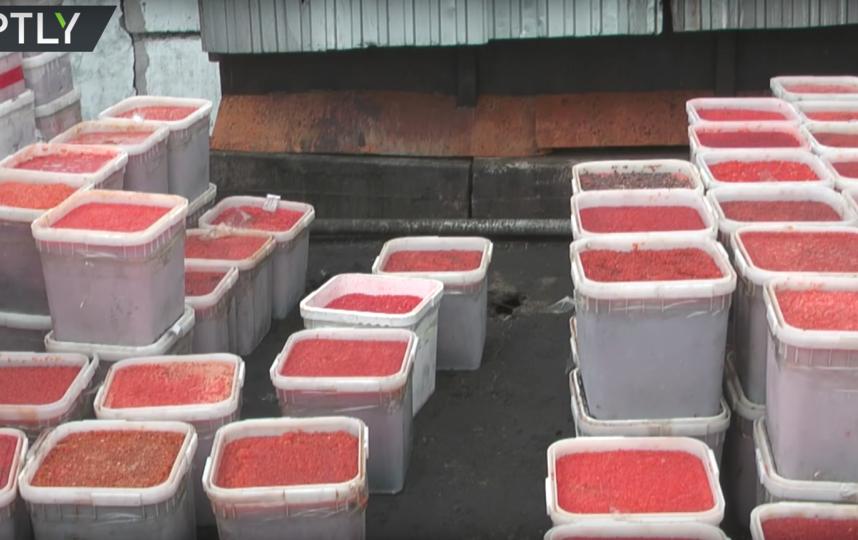 Кадры утилизации икры. Фото RT на русском