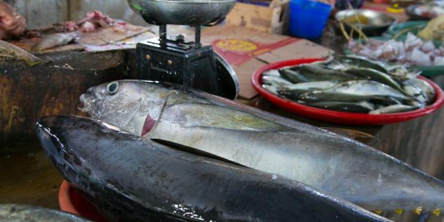 Рыбный рынок на острове Бали.