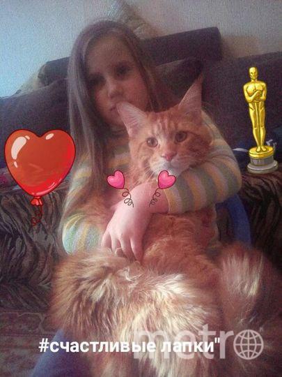 Селфи с котиком. кот мейнкун Бенджиро. Фото Сушкова Юлия Рафаэльевна.г.Пушкин