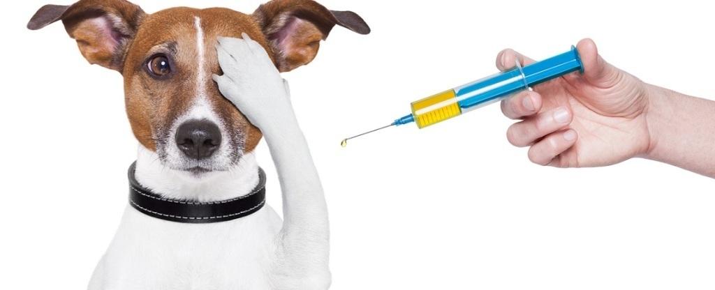 Прививки делаются от бешенства. Фото petan-vet.ru