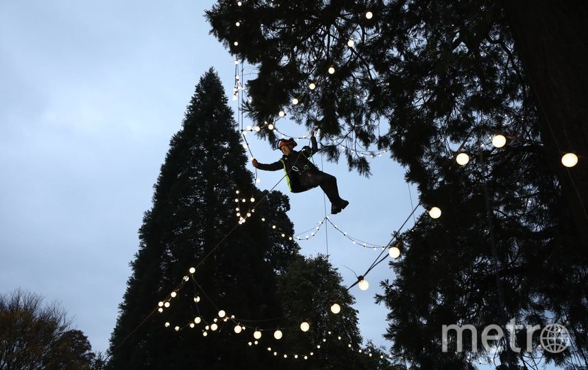 "Знаменитая ""елка"" (redwood tree), точнее, секвойя. Фото Getty"