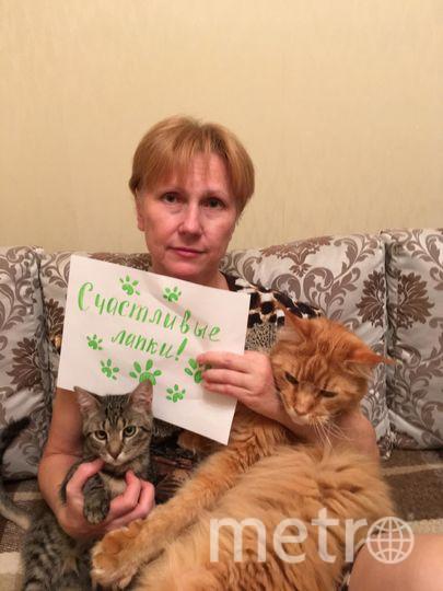 Меня зовут Татьяна Ладанова. Я постоянная читательница газеты Метро. И со мной мои котики. Маленький котик из приюта, зовут Веньчик, взрослый мейн-кун - Лучик. Очень их люблю. У них действительно счастливые лапки.