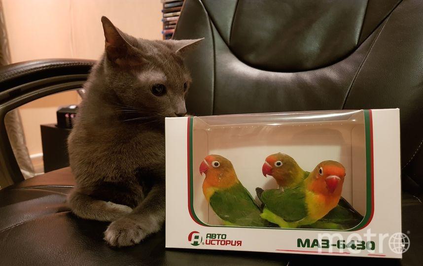 """""""В карцере"""". Охранник рядом за не послушание. Попугаи Ева, Роналдо и Патрик. Фото Руслан"""