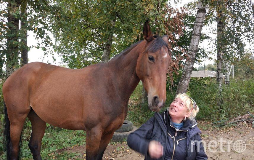 """На свободном выгуле Бута не любит пастись, а любит выпрашивать как можно больше угощения из своих людей. При этом гарантировано будешь вылизан. Весь этот """"театр"""" сопровождается самым невинным лицом. На конюшне прозвали """"лошадь-собака"""". Фото Дана Туйск"""