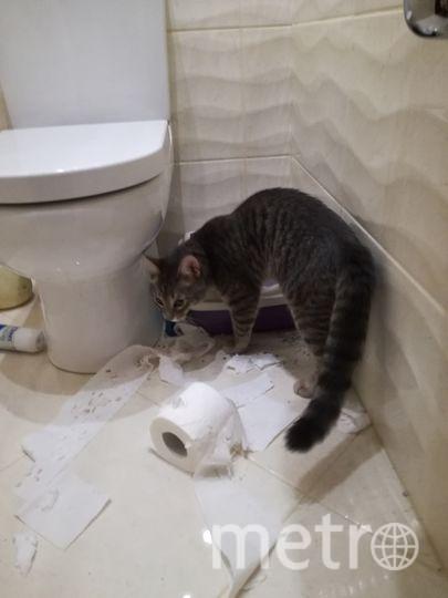 Моему котику Тишке семь месяцев. Он очень жизнерадостный, энергичный и любознательный кот. Мало того, что он, должен побывать везде: на шкафах, на дверях и т.д., он также наблюдает за тем, что делают другие. Фото Татьяна