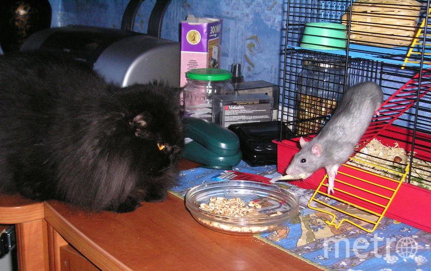Мишка приглашает на обед крысу Джульетту. Фото Муравьев Александр