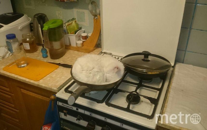 Это один из наших питомцев, кот Вася. В каких только не предсказуемых и не удобных местах он любит спать,но это превзошло все его варианты. Фото Елена