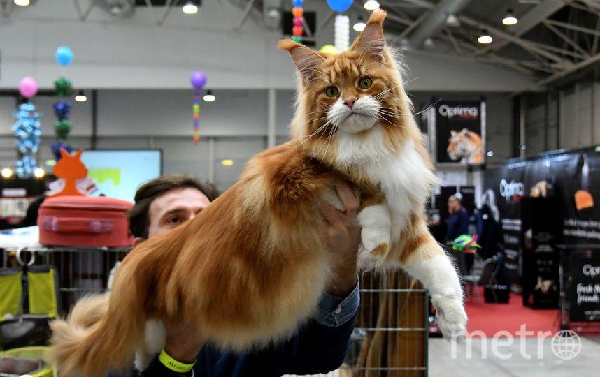 Выставка кошек в Италии. Фото AFP