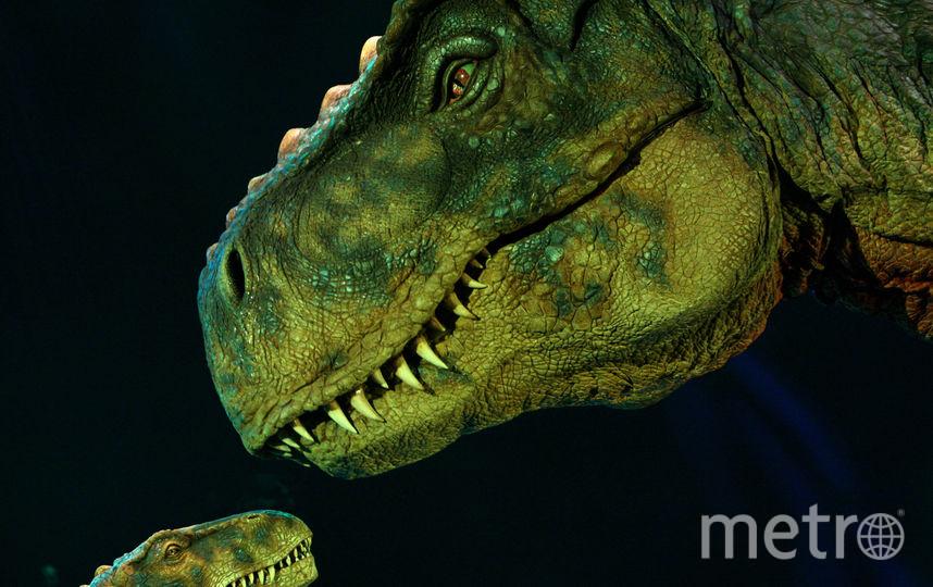 В России впервые нашли окаменелое яйцо динозавра. Фото Getty