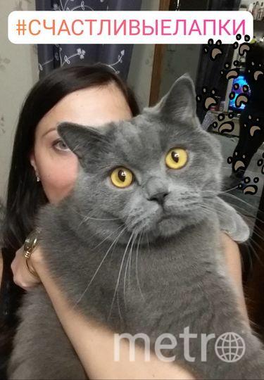 Меня зовут Екатерина Катышева, а моего плюшика кота зовут Джимбо, дома просто Джем, Джемик.
