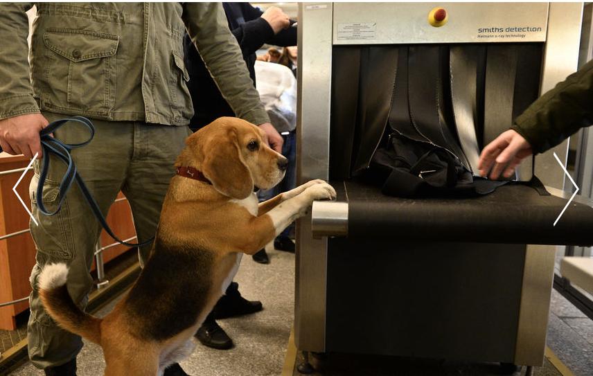 Собаки на каждой станции – это очень дорого.