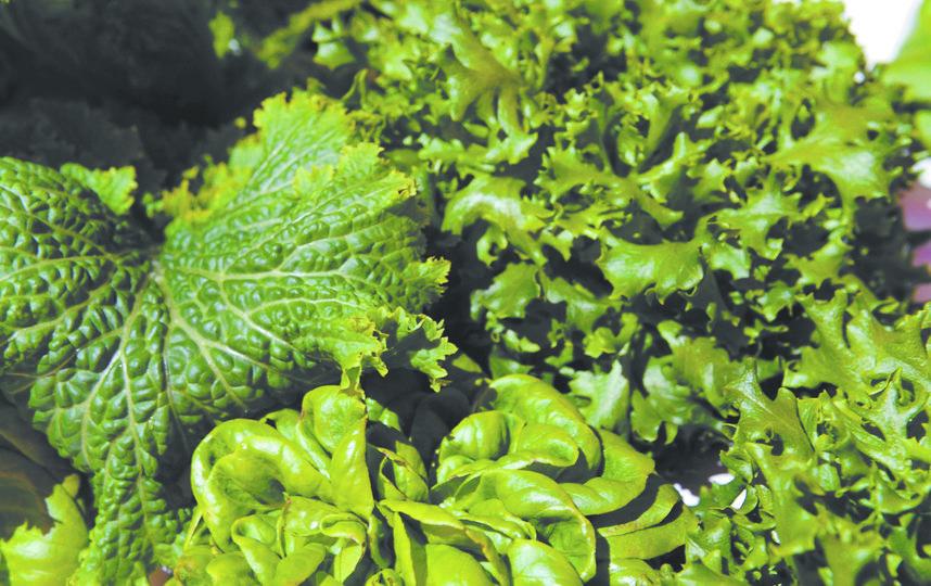 Традиционное производство животной и растительной пищи требует огромного количества ресурсов. Фото Getty