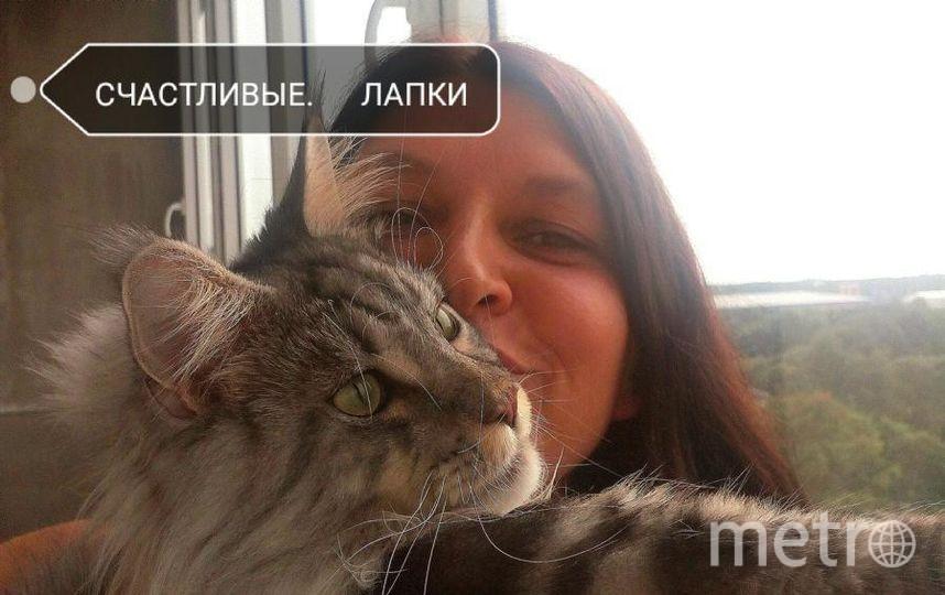 Орловская Светлана, кот Сильвер.
