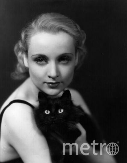 День черной кошки в 2017 году: История праздника. Фото Getty