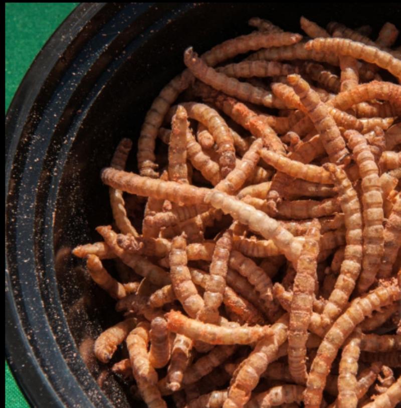 На Украине курсантов-летчиков кормили тараканами и червями. Фото Getty