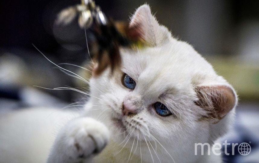 Выставка кошек в Москве. Фото AFP