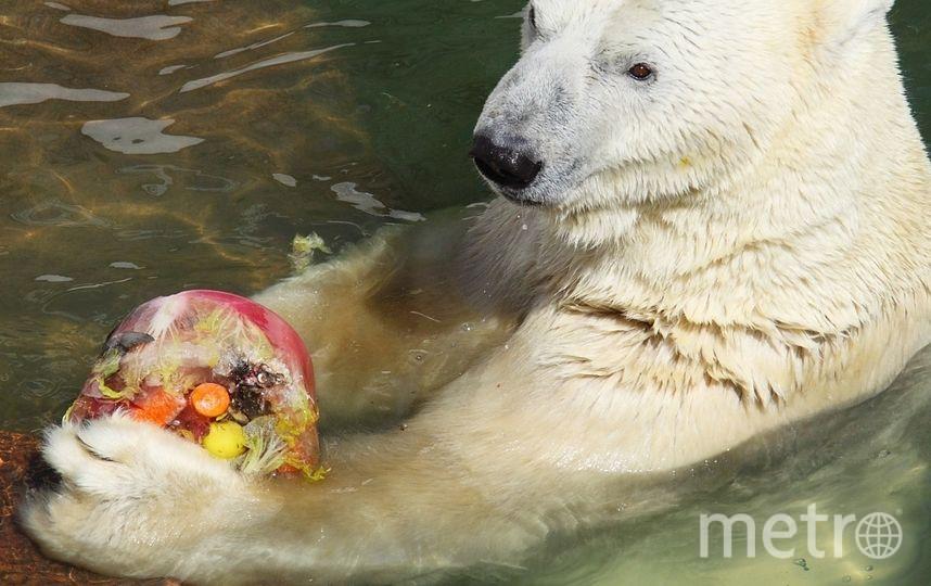 На день рождения Усладе подарили ледяной торт с рыбой и овощами. Фото Фото предоставлено пресс-службой Ленинградского зоопарка.