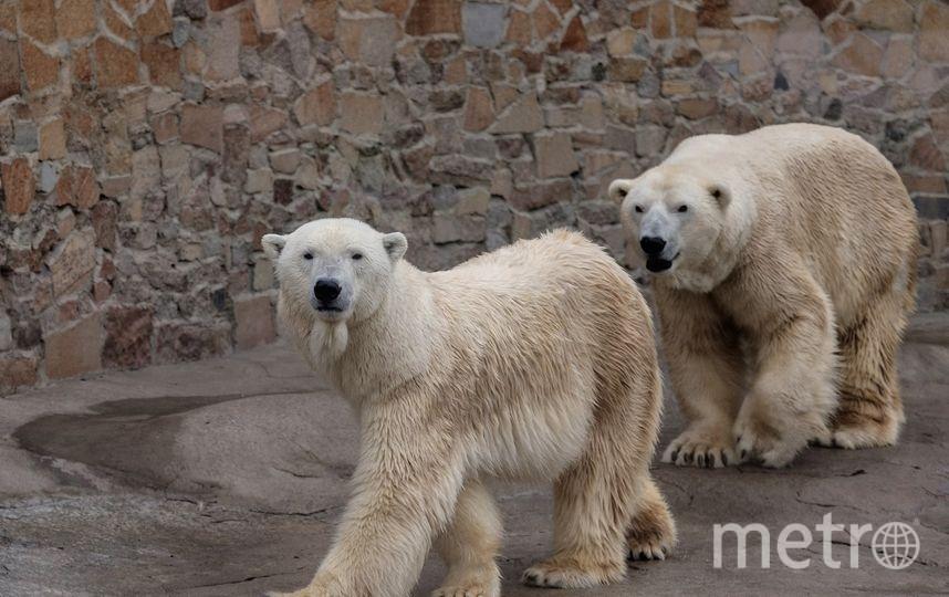 """Медведица Услада с """"супругом"""", медведведем Меньшиковым - фотоархив. Фото Алена Бобрович."""