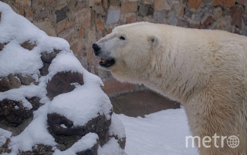 Медведица Услада - фотоархив. Фото Алена Бобрович.