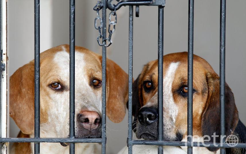 Ученые: собаки реагируют наулыбку людей