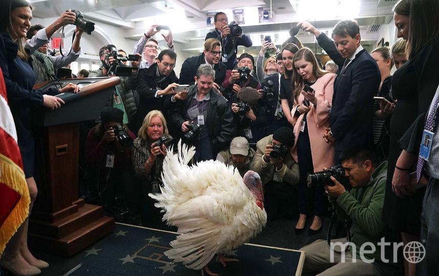 Церемония помилования индеек состоялась в Белом Доме. Фото Getty