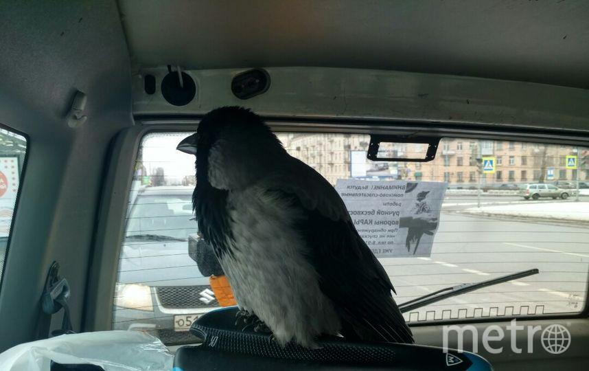 Птице нравится ездить в машине и подпевать радио. Фото предоставлены героем материала
