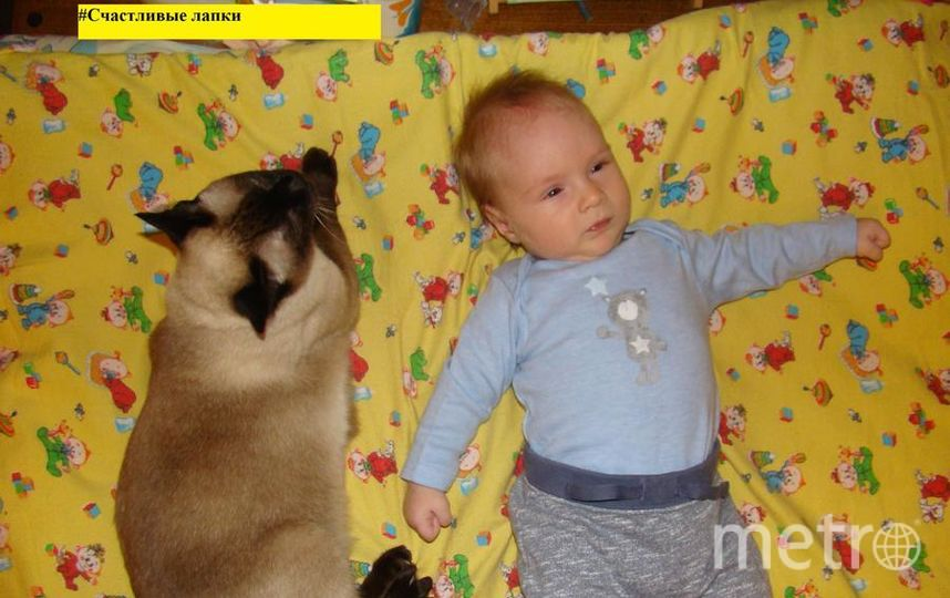 Меня зовут Абрашитова Юлия. На фото мой сын Роман и наша любимая кошка Лиза, которая с мужеством терпит все проявления любви от малышей и следила за ними как настоящая мать, пока они были совсем крохами! Стоило только кому-то из них заплакать, как она бежала проверять что же случилось!