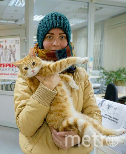 "Кошка Булочка. Фото ""Metro"""