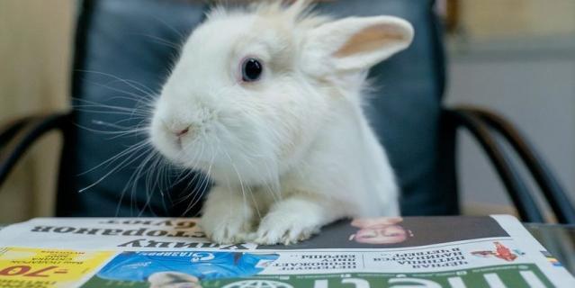 Кролик Кроля.