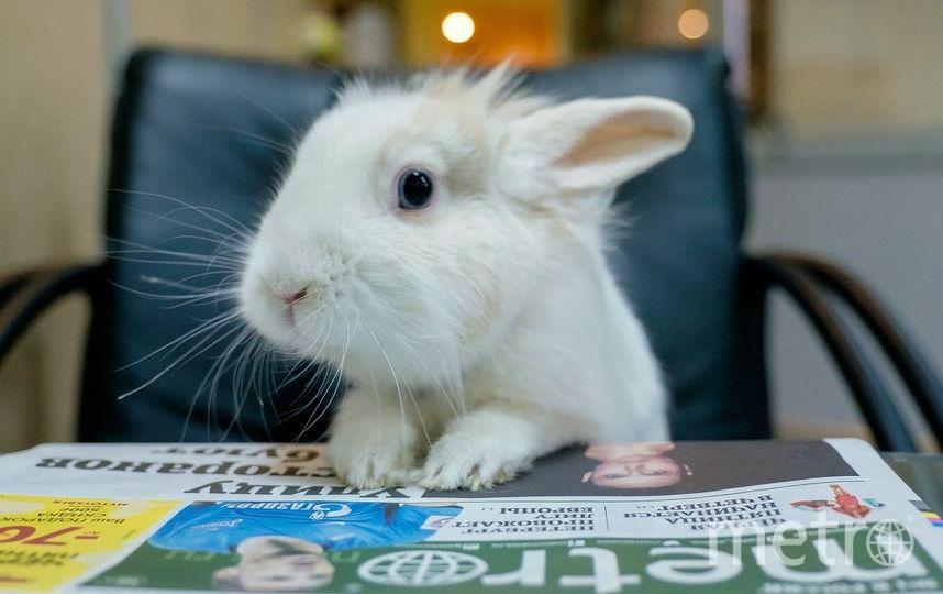 """Кролик Кроля. Фото """"Metro"""""""