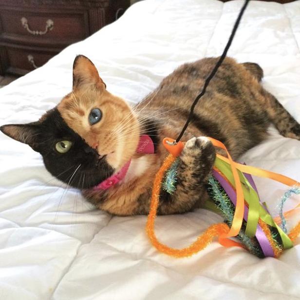 Кошка Венера. Фото Instagram