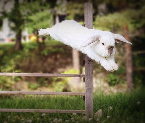 Кролик Экземпл. Фото Instagram