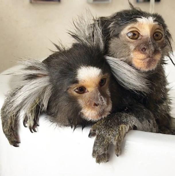 Обезьянки Дидди и Йети. Фото Instagram