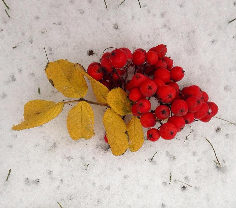 Почти треть месячной нормы осадков выпало в Москве за сутки. Фото скриншот https://www.instagram.com/lyubov_starkova/