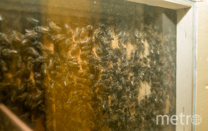 Музей, посвящённый пчёлам. Фото Илья Ордовский-Танаевский