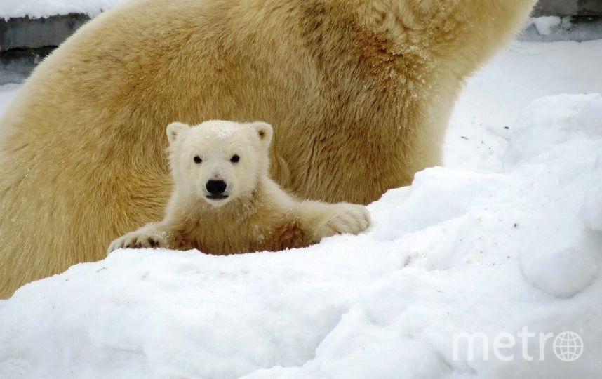 Снежинка. Фото zoo.ykt.ru