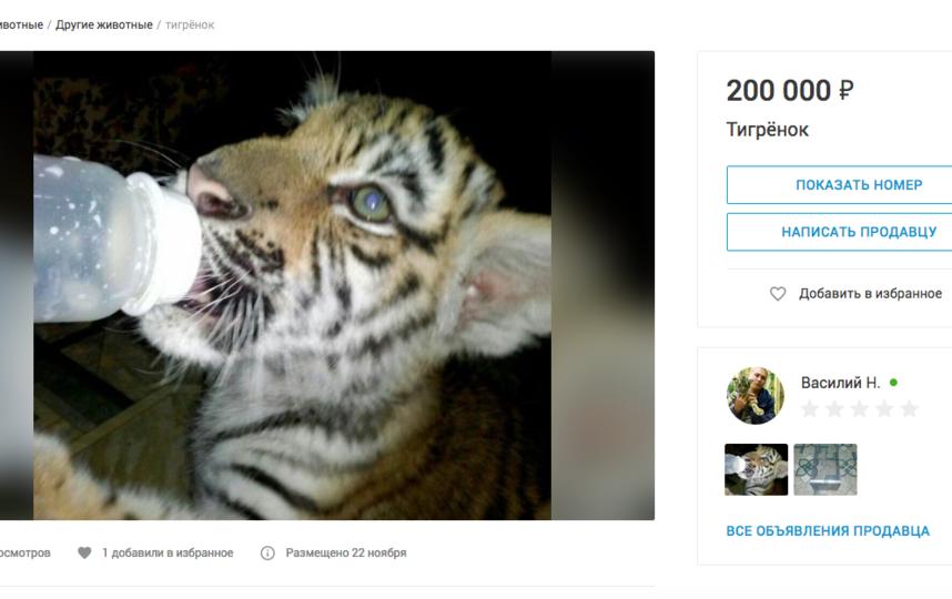 Тигрёнок, 200 тысяч рублей. Фото Скриншот youla.io/sankt-peterburg