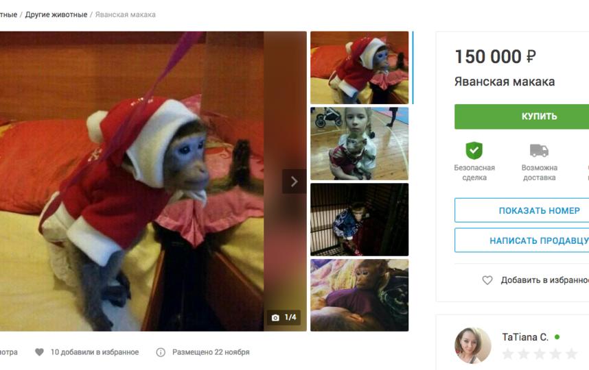 Яванская макака, 150 тысяч рублей. Фото Скриншот youla.io/sankt-peterburg