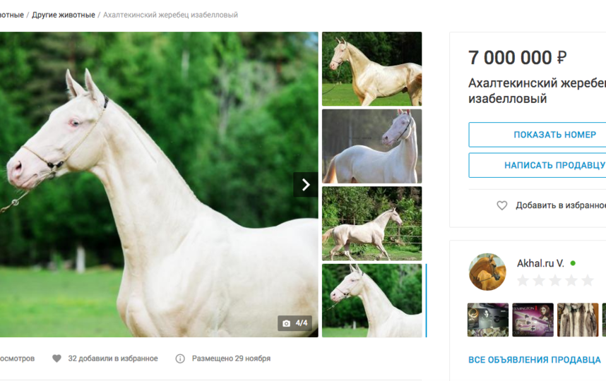 Ахалтекинский жеребец изабелловый, за 7 млн рублей. Фото Скриншот youla.io/sankt-peterburg