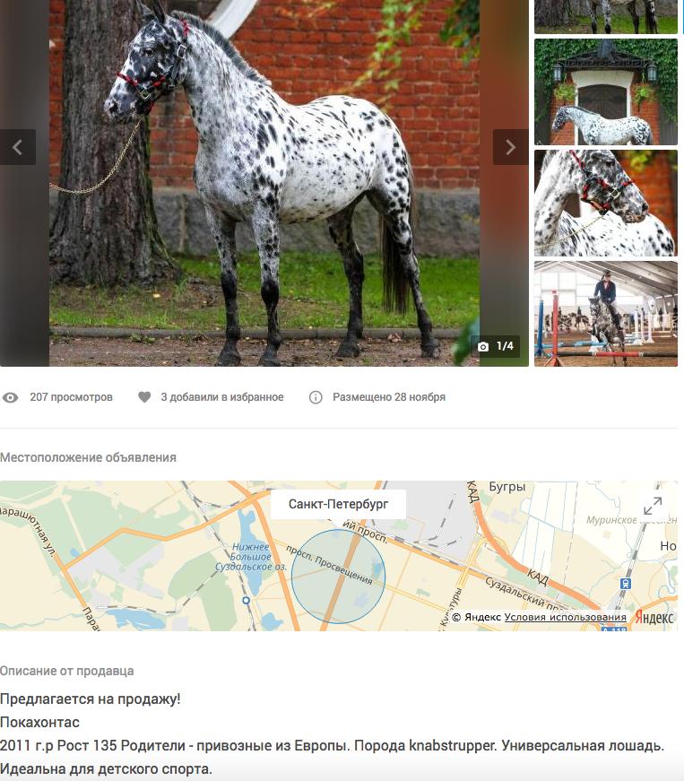 Чубарая пони за 550 тысяч рублей. Фото Скриншот youla.io/sankt-peterburg